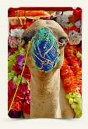 Ipad Case Desert camel